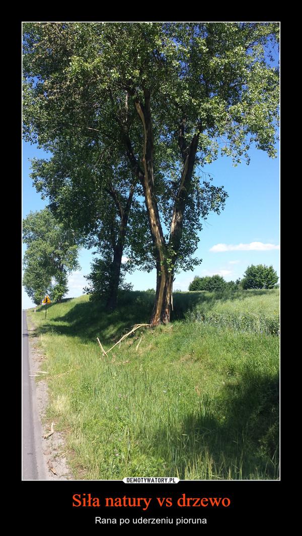 Siła natury vs drzewo – Rana po uderzeniu pioruna