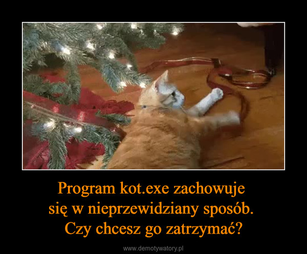 Program kot.exe zachowuje się w nieprzewidziany sposób. Czy chcesz go zatrzymać? –
