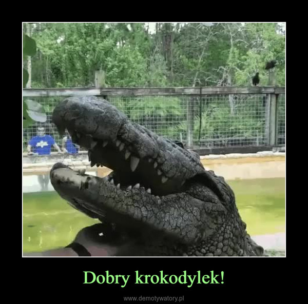 Dobry krokodylek! –