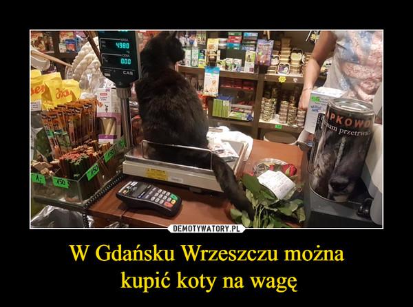 W Gdańsku Wrzeszczu można kupić koty na wagę –