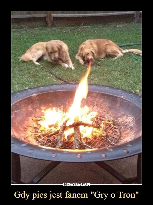 """Gdy pies jest fanem """"Gry o Tron"""" –"""