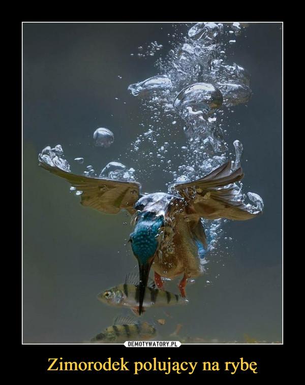 Zimorodek polujący na rybę –
