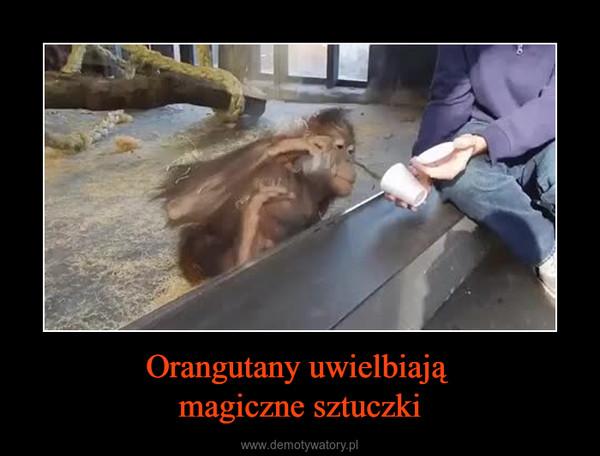 Orangutany uwielbiają magiczne sztuczki –