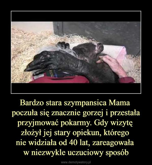 Bardzo stara szympansica Mama poczuła się znacznie gorzej i przestała przyjmować pokarmy. Gdy wizytę złożył jej stary opiekun, którego nie widziała od 40 lat, zareagowała w niezwykle uczuciowy sposób –