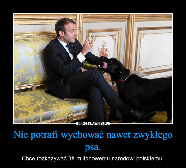 Nie potrafi wychować nawet zwykłego psa. – Chce rozkazywać 38-milionowemu narodowi polskiemu.