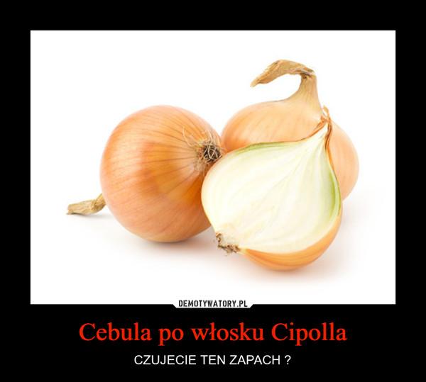 Cebula po włosku Cipolla – CZUJECIE TEN ZAPACH ?