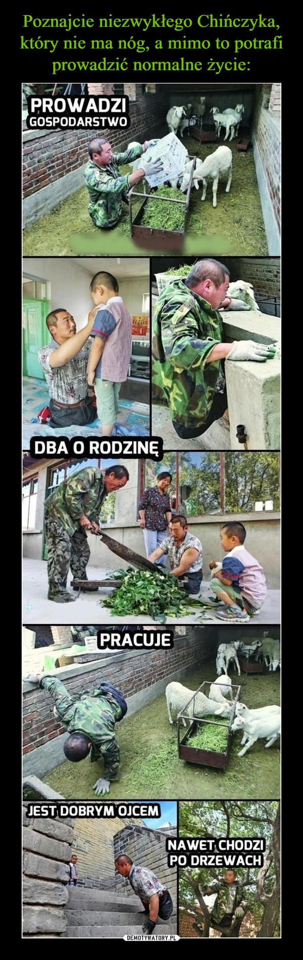 –  Prowadzi gospodarstwo dba o rodzinę pracuje jest dobrym ojcem nawet chodzi po drzewach