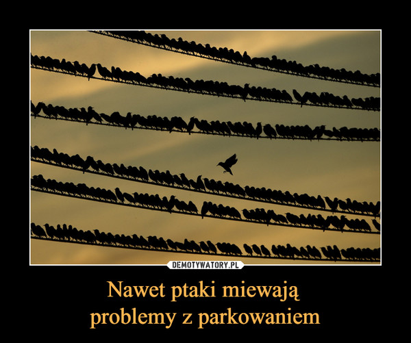 Nawet ptaki miewają problemy z parkowaniem –