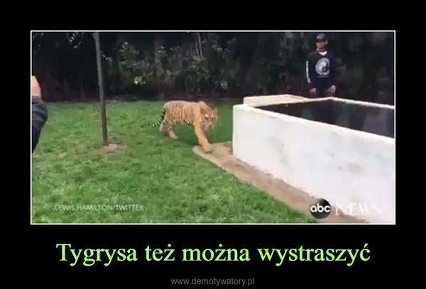 Tygrysa też można wystraszyć –