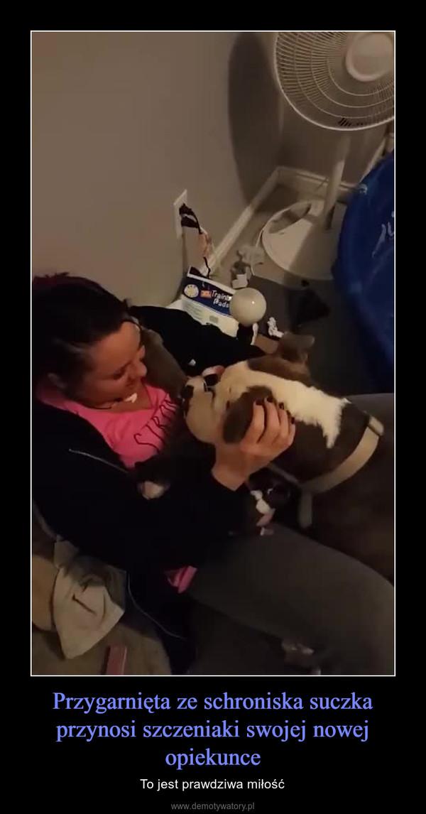 Przygarnięta ze schroniska suczka przynosi szczeniaki swojej nowej opiekunce – To jest prawdziwa miłość