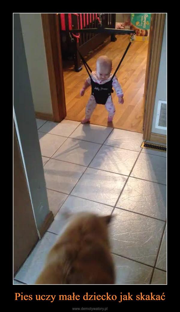Pies uczy małe dziecko jak skakać –