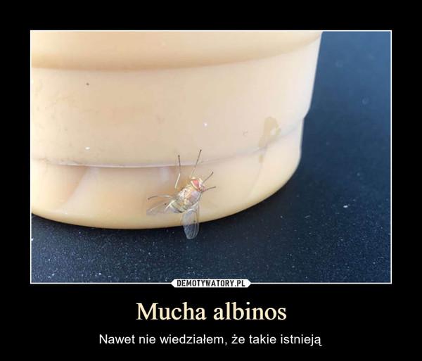 Mucha albinos – Nawet nie wiedziałem, że takie istnieją