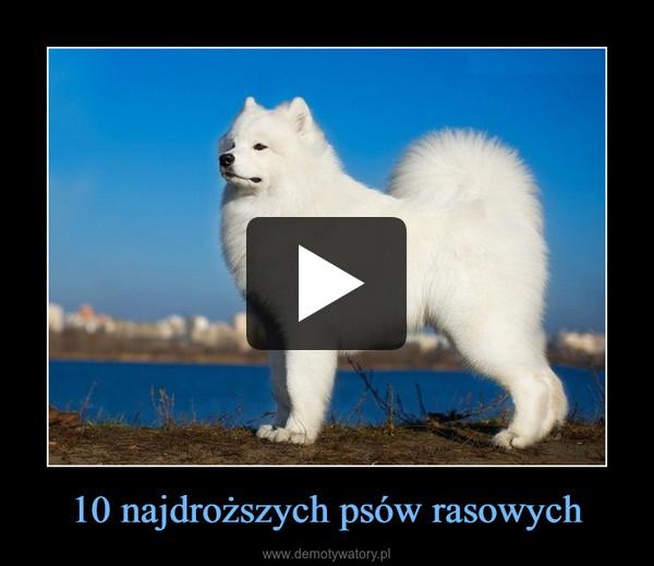 10 najdroższych psów rasowych –