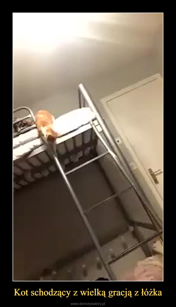 Kot schodzący z wielką gracją z łóżka –