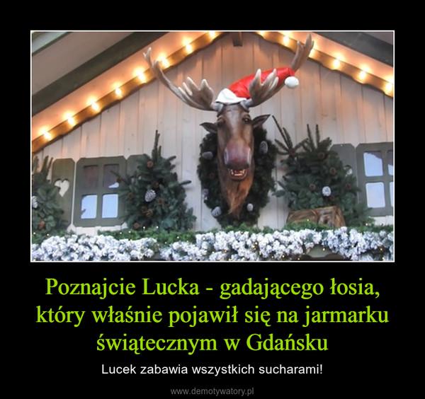 Poznajcie Lucka - gadającego łosia, który właśnie pojawił się na jarmarku świątecznym w Gdańsku – Lucek zabawia wszystkich sucharami!