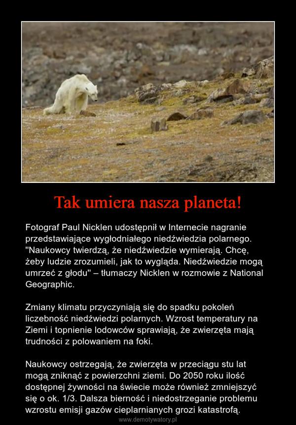 Tak umiera nasza planeta! – Fotograf Paul Nicklen udostępnił w Internecie nagranie przedstawiające wygłodniałego niedźwiedzia polarnego. ''Naukowcy twierdzą, że niedźwiedzie wymierają. Chcę, żeby ludzie zrozumieli, jak to wygląda. Niedźwiedzie mogą umrzeć z głodu'' – tłumaczy Nicklen w rozmowie z National Geographic. Zmiany klimatu przyczyniają się do spadku pokoleń liczebność niedźwiedzi polarnych. Wzrost temperatury na Ziemi i topnienie lodowców sprawiają, że zwierzęta mają trudności z polowaniem na foki.Naukowcy ostrzegają, że zwierzęta w przeciągu stu lat mogą zniknąć z powierzchni ziemi. Do 2050 roku ilość dostępnej żywności na świecie może również zmniejszyć się o ok. 1/3. Dalsza bierność i niedostrzeganie problemu wzrostu emisji gazów cieplarnianych grozi katastrofą.