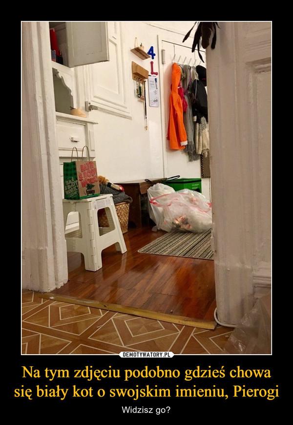 Na tym zdjęciu podobno gdzieś chowa się biały kot o swojskim imieniu, Pierogi – Widzisz go?