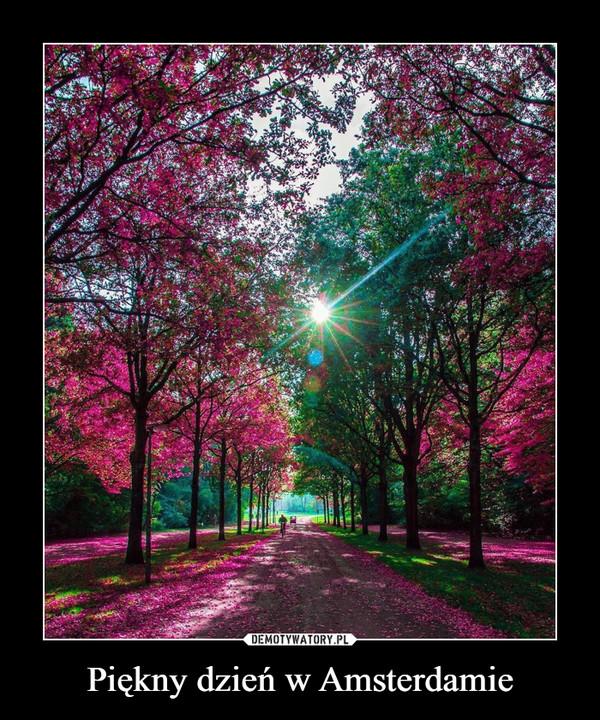 Piękny dzień w Amsterdamie –
