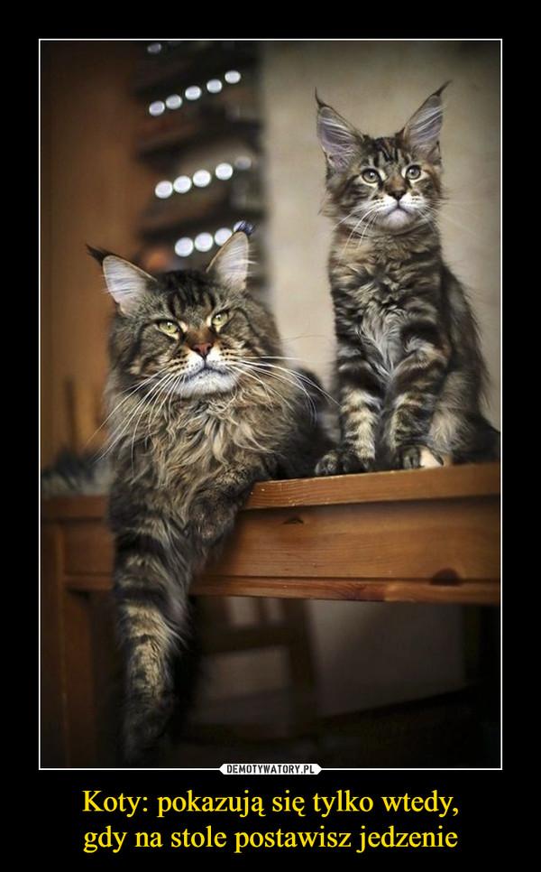 Koty: pokazują się tylko wtedy,gdy na stole postawisz jedzenie –
