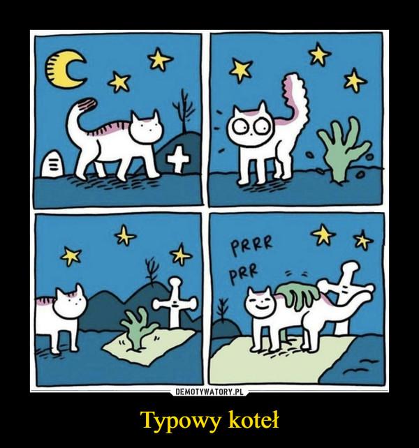 Typowy koteł –