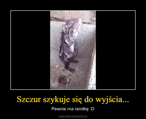 Szczur szykuje się do wyjścia... – Pewnie ma randkę :D