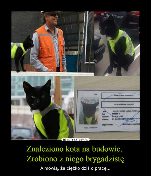 Znaleziono kota na budowie. Zrobiono z niego brygadzistę – A mówią, że ciężko dziś o pracę...