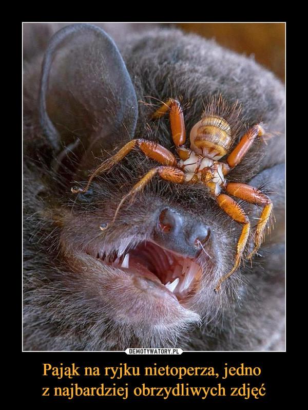Pająk na ryjku nietoperza, jedno z najbardziej obrzydliwych zdjęć –