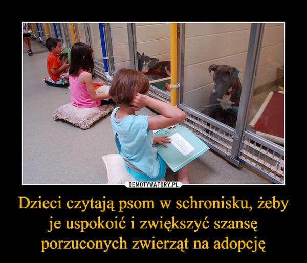 Dzieci czytają psom w schronisku, żeby je uspokoić i zwiększyć szansę porzuconych zwierząt na adopcję –