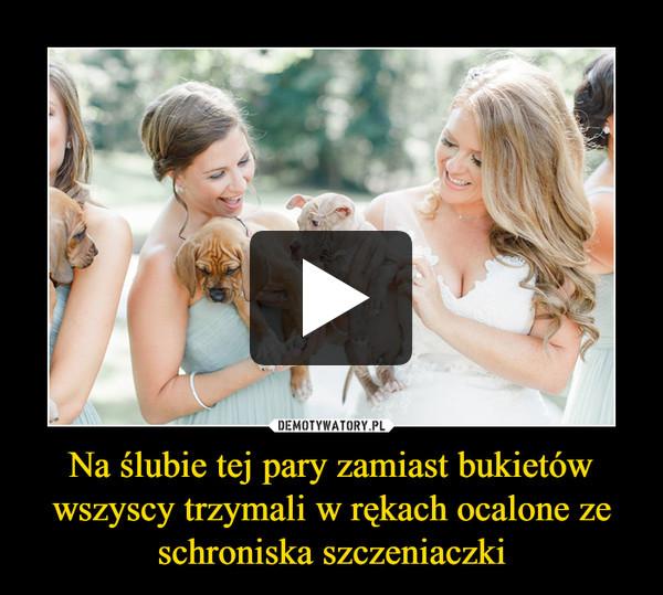 Na ślubie tej pary zamiast bukietów wszyscy trzymali w rękach ocalone ze schroniska szczeniaczki –