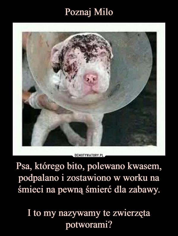 Psa, którego bito, polewano kwasem, podpalano i zostawiono w worku na śmieci na pewną śmierć dla zabawy.I to my nazywamy te zwierzęta potworami? –