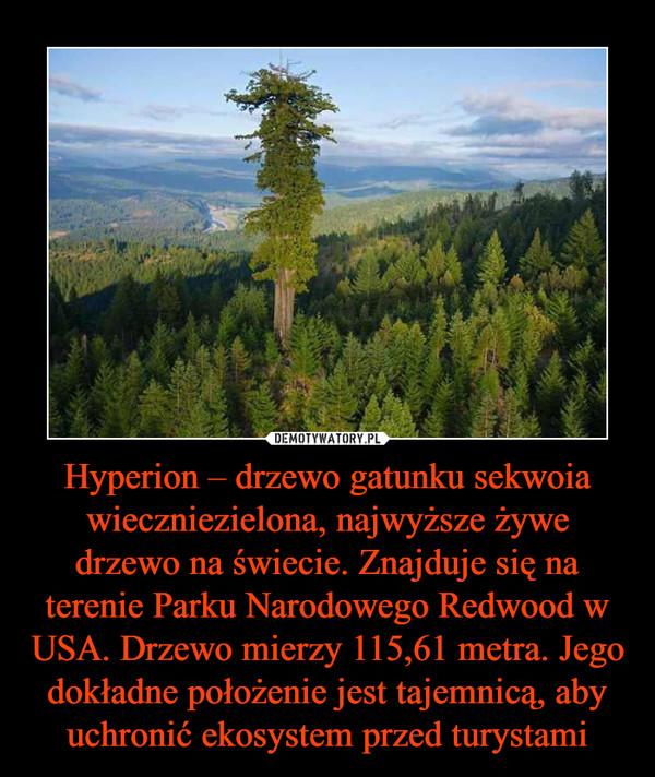 Hyperion – drzewo gatunku sekwoia wieczniezielona, najwyższe żywe drzewo na świecie. Znajduje się na terenie Parku Narodowego Redwood w USA. Drzewo mierzy 115,61 metra. Jego dokładne położenie jest tajemnicą, aby uchronić ekosystem przed turystami –