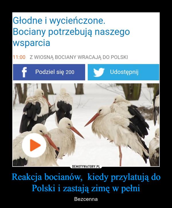 Reakcja bocianów,  kiedy przylatują do Polski i zastają zimę w pełni – Bezcenna