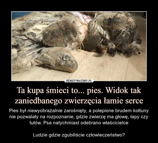 Ta kupa śmieci to... pies. Widok tak zaniedbanego zwierzęcia łamie serce – Pies był niewyobrażalnie zarośnięty, a polepione brudem kołtuny nie pozwalały na rozpoznanie, gdzie zwierzę ma głowę, łapy czy tułów. Psa natychmiast odebrano właścicielceLudzie gdzie zgubiliście człowieczeństwo?