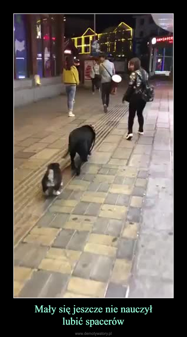 Mały się jeszcze nie nauczyłlubić spacerów –