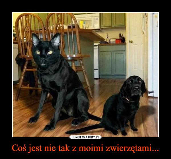Coś jest nie tak z moimi zwierzętami... –
