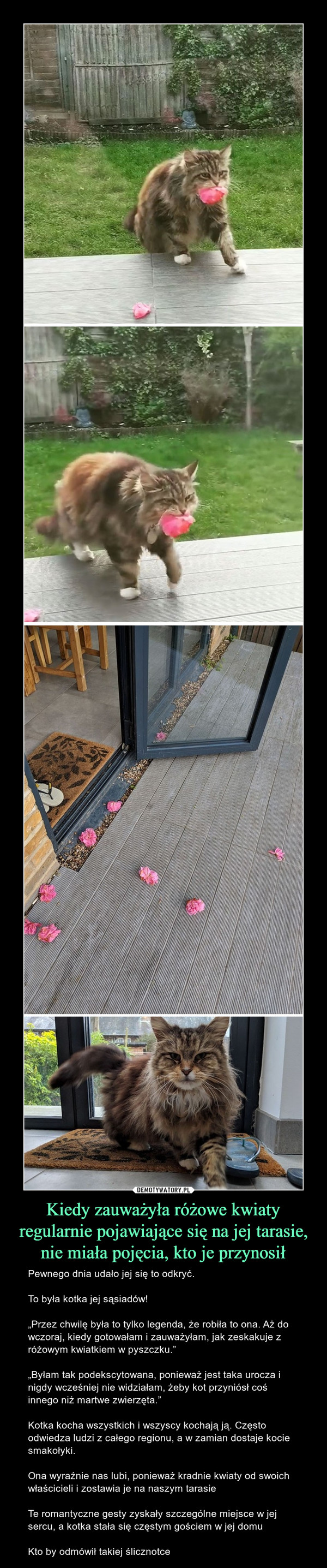 """Kiedy zauważyła różowe kwiaty regularnie pojawiające się na jej tarasie, nie miała pojęcia, kto je przynosił – Pewnego dnia udało jej się to odkryć.To była kotka jej sąsiadów!""""Przez chwilę była to tylko legenda, że robiła to ona. Aż do wczoraj, kiedy gotowałam i zauważyłam, jak zeskakuje z różowym kwiatkiem w pyszczku.""""""""Byłam tak podekscytowana, ponieważ jest taka urocza i nigdy wcześniej nie widziałam, żeby kot przyniósł coś innego niż martwe zwierzęta.""""Kotka kocha wszystkich i wszyscy kochają ją. Często odwiedza ludzi z całego regionu, a w zamian dostaje kocie smakołyki.Ona wyraźnie nas lubi, ponieważ kradnie kwiaty od swoich właścicieli i zostawia je na naszym tarasieTe romantyczne gesty zyskały szczególne miejsce w jej sercu, a kotka stała się częstym gościem w jej domuKto by odmówił takiej ślicznotce"""