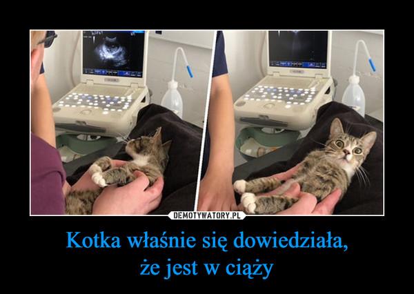 Kotka właśnie się dowiedziała,że jest w ciąży –
