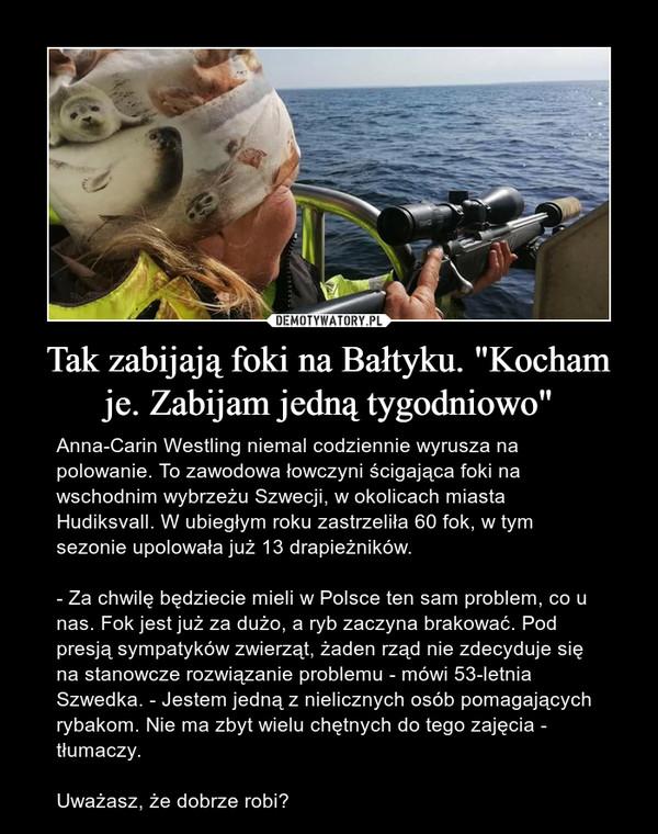 """Tak zabijają foki na Bałtyku. """"Kocham je. Zabijam jedną tygodniowo"""" – Anna-Carin Westling niemal codziennie wyrusza na polowanie. To zawodowa łowczyni ścigająca foki na wschodnim wybrzeżu Szwecji, w okolicach miasta Hudiksvall. W ubiegłym roku zastrzeliła 60 fok, w tym sezonie upolowała już 13 drapieżników.  - Za chwilę będziecie mieli w Polsce ten sam problem, co u nas. Fok jest już za dużo, a ryb zaczyna brakować. Pod presją sympatyków zwierząt, żaden rząd nie zdecyduje się na stanowcze rozwiązanie problemu - mówi 53-letnia Szwedka. - Jestem jedną z nielicznych osób pomagających rybakom. Nie ma zbyt wielu chętnych do tego zajęcia - tłumaczy.Uważasz, że dobrze robi?"""