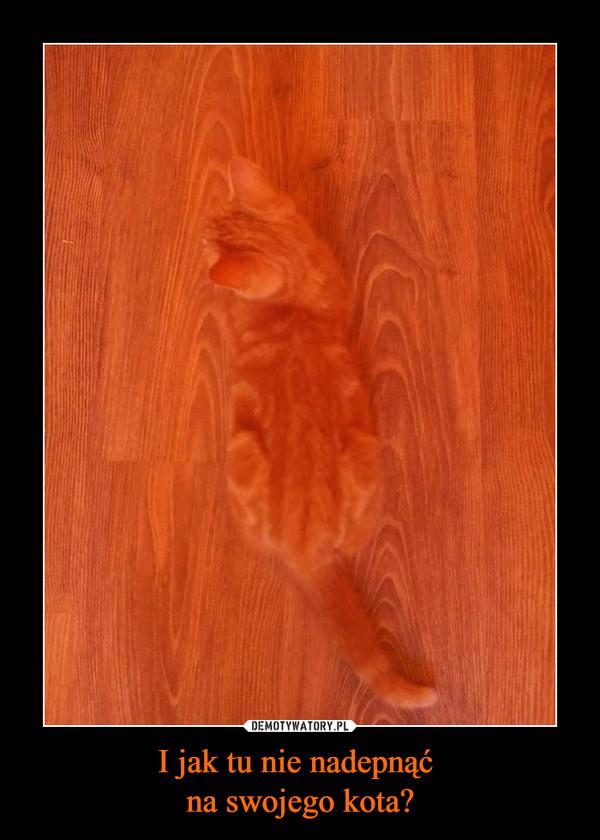 I jak tu nie nadepnąć na swojego kota? –