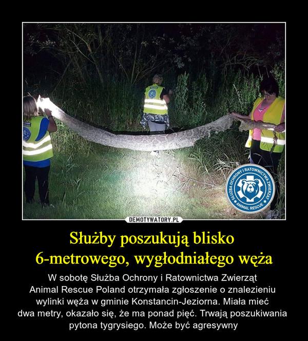 Służby poszukują blisko 6-metrowego, wygłodniałego węża – W sobotę Służba Ochrony i Ratownictwa Zwierząt Animal Rescue Poland otrzymała zgłoszenie o znalezieniu wylinki węża w gminie Konstancin-Jeziorna. Miała mieć dwa metry, okazało się, że ma ponad pięć. Trwają poszukiwania pytona tygrysiego. Może być agresywny