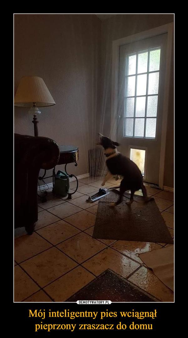Mój inteligentny pies wciągnął pieprzony zraszacz do domu –