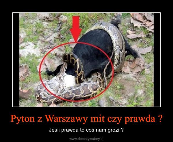 Pyton z Warszawy mit czy prawda ? – Jeśli prawda to coś nam grozi ?