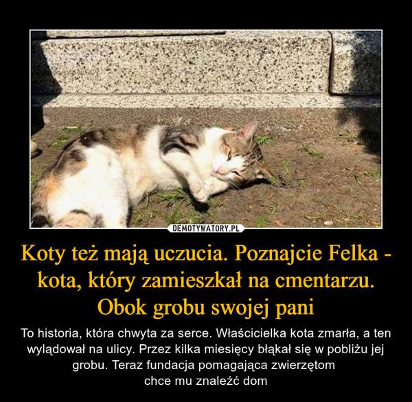 Koty też mają uczucia. Poznajcie Felka - kota, który zamieszkał na cmentarzu. Obok grobu swojej pani – To historia, która chwyta za serce. Właścicielka kota zmarła, a ten wylądował na ulicy. Przez kilka miesięcy błąkał się w pobliżu jej grobu. Teraz fundacja pomagająca zwierzętom chce mu znaleźć dom