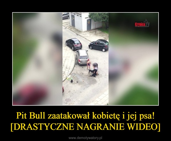 Pit Bull zaatakował kobietę i jej psa! [DRASTYCZNE NAGRANIE WIDEO] –