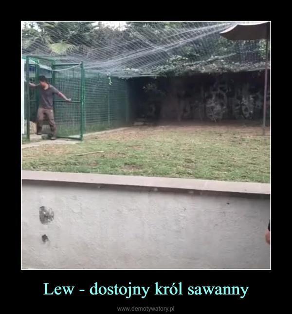 Lew - dostojny król sawanny –