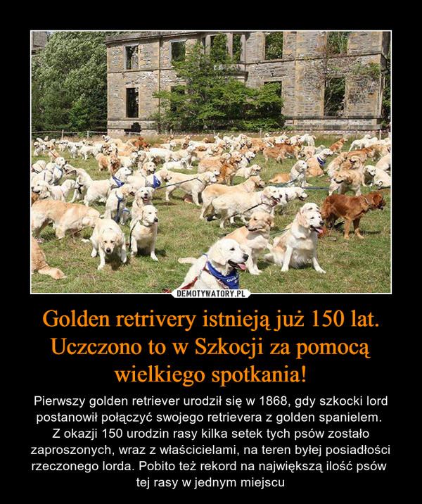 Golden retrivery istnieją już 150 lat. Uczczono to w Szkocji za pomocą wielkiego spotkania! – Pierwszy golden retriever urodził się w 1868, gdy szkocki lord postanowił połączyć swojego retrievera z golden spanielem. Z okazji 150 urodzin rasy kilka setek tych psów zostało zaproszonych, wraz z właścicielami, na teren byłej posiadłości rzeczonego lorda. Pobito też rekord na największą ilość psów tej rasy w jednym miejscu