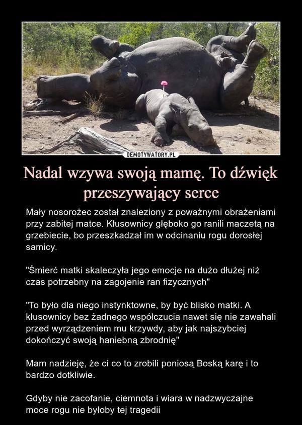 """Nadal wzywa swoją mamę. To dźwięk przeszywający serce – Mały nosorożec został znaleziony z poważnymi obrażeniami przy zabitej matce. Kłusownicy głęboko go ranili maczetą na grzebiecie, bo przeszkadzał im w odcinaniu rogu dorosłej samicy.""""Śmierć matki skaleczyła jego emocje na dużo dłużej niż czas potrzebny na zagojenie ran fizycznych""""""""To było dla niego instynktowne, by być blisko matki. A kłusownicy bez żadnego współczucia nawet się nie zawahali przed wyrządzeniem mu krzywdy, aby jak najszybciej dokończyć swoją haniebną zbrodnię""""Mam nadzieję, że ci co to zrobili poniosą Boską karę i to bardzo dotkliwie.Gdyby nie zacofanie, ciemnota i wiara w nadzwyczajne moce rogu nie byłoby tej tragedii"""