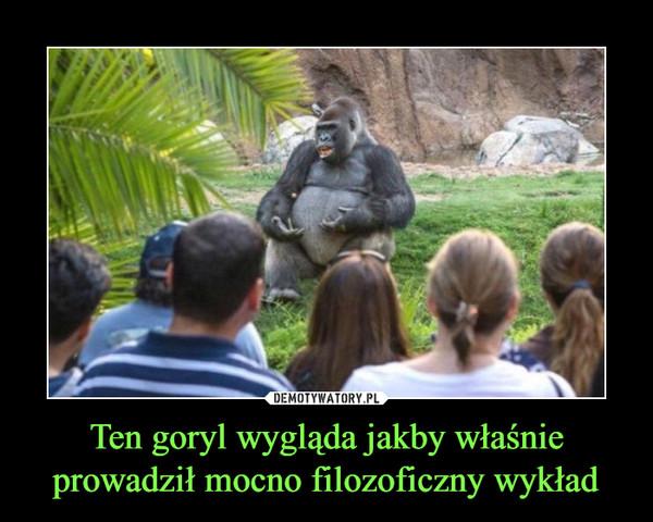 Ten goryl wygląda jakby właśnie prowadził mocno filozoficzny wykład –