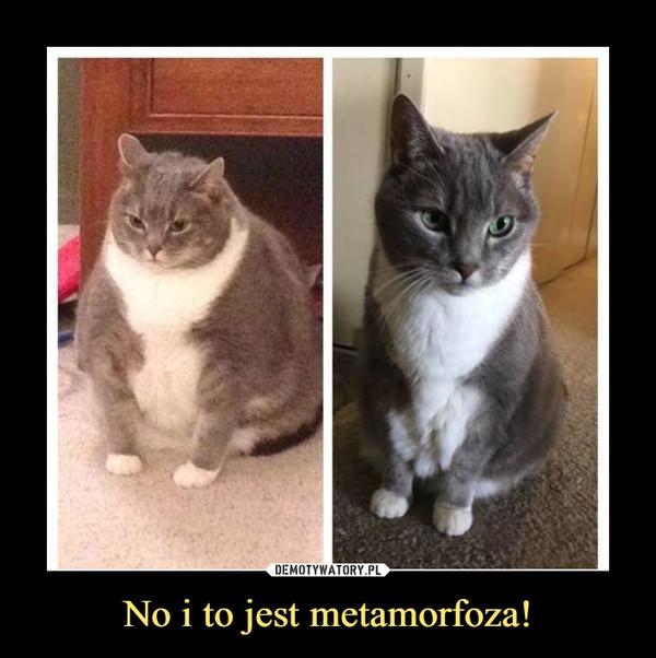 No i to jest metamorfoza! –