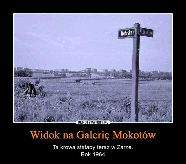 Widok na Galerię Mokotów – Ta krowa stałaby teraz w Zarze.Rok 1964